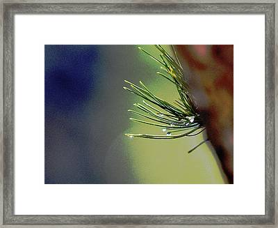 2 Pine Needles Abstract Framed Print