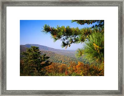 Pine Tree And Forested Ridges Framed Print by Raymond Gehman
