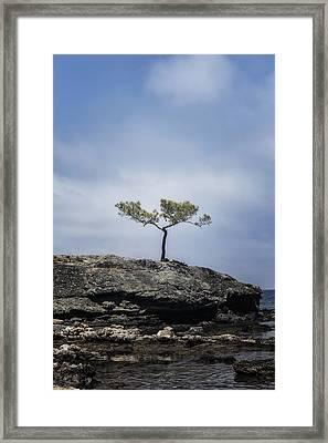 Pine Tree Framed Print by Joana Kruse