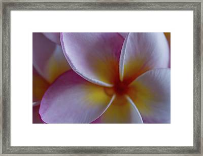 Framed Print featuring the photograph Plumeria by Roger Mullenhour
