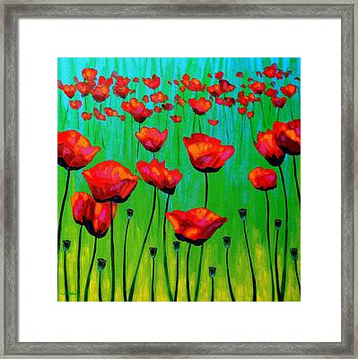 Poppy Dance Framed Print by John  Nolan