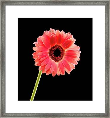 Pretty In Pink Framed Print by Jean Noren