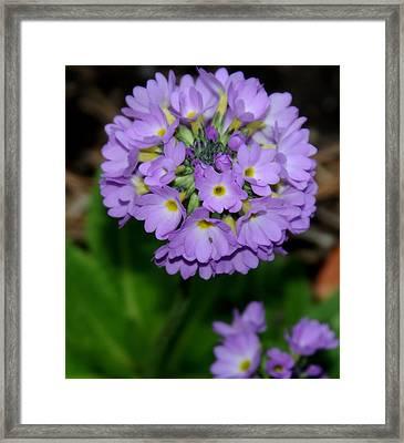 Purple Bloom Framed Print