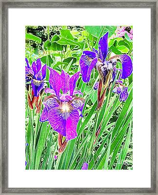 Purple Irises Framed Print by Anne Sands