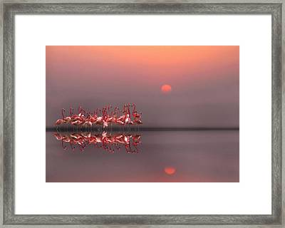 Purple Sunset Framed Print by Anna Cseresnjes