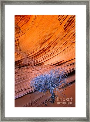 Rainbow Rocks Dead Bush #1 Framed Print