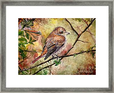 Red Backed Shrike Framed Print by Andrew Read
