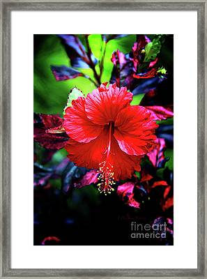 Red Hibiscus 2 Framed Print by Inspirational Photo Creations Audrey Woods