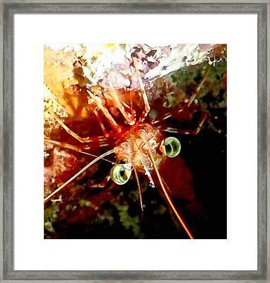Red Night Shrimp Framed Print by Amy McDaniel