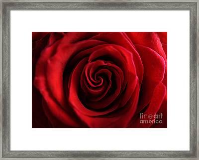 Red Rose  Framed Print by Jelena Jovanovic