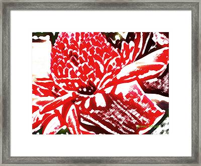 Red Torch Ginger Framed Print