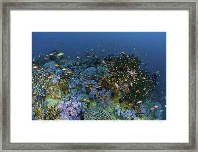 Reef Scene With Coral And Fish Framed Print by Mathieu Meur