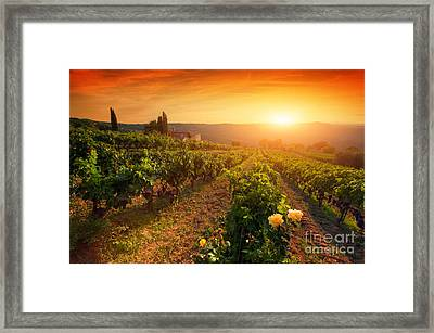 Ripe Wine Grapes On Vines In Tuscany, Italy Framed Print by Michal Bednarek