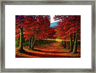 Road To The Clearing Framed Print