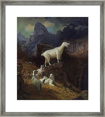 Rocky Mountain Goats Framed Print by Celestial Images