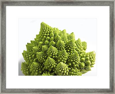 Romanesco Broccoli Or Cauliflower Framed Print