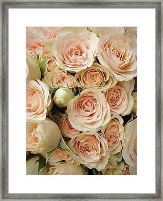 Rose Blush Framed Print