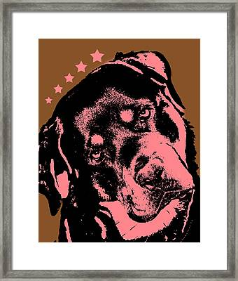 Rottweiler  Framed Print by Dean Russo