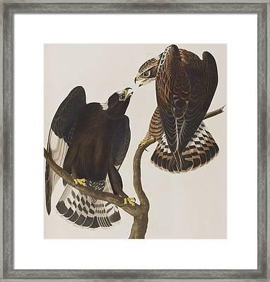 Rough-legged Falcon Framed Print by John James Audubon