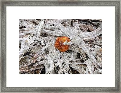 Framed Print featuring the photograph Seattle Morning by David Lee Thompson