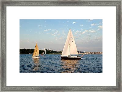 Sailing Framed Print by Tom Dowd