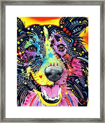 Sheltie Framed Print by Dean Russo