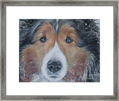 Shetland Sheepdog Framed Print by Lee Ann Shepard