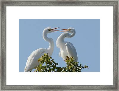 Siblings Framed Print by Fraida Gutovich