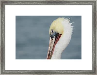 Framed Print featuring the photograph Simplicity by Fraida Gutovich