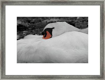 Framed Print featuring the photograph Sleeping Beauty by Scott Carruthers