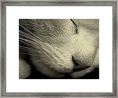 Sleeping Cat Framed Print by Martin Newman