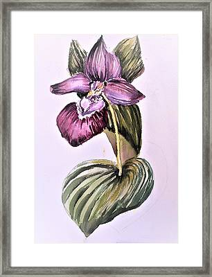 Framed Print featuring the painting Slipper Foot Orchid by Mindy Newman