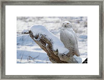 Framed Print featuring the photograph Snowy Owl by Jim  Hatch