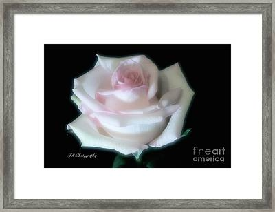 Soft Pink Rose Bud Framed Print by Jeannie Rhode