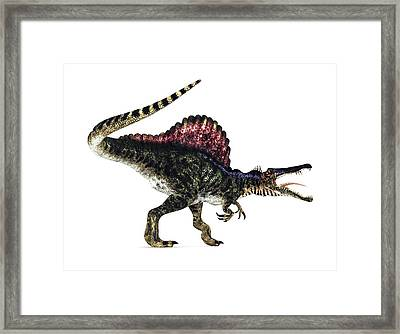 Spinosaurus Dinosaur, Artwork Framed Print by Animate4.comscience Photo Libary