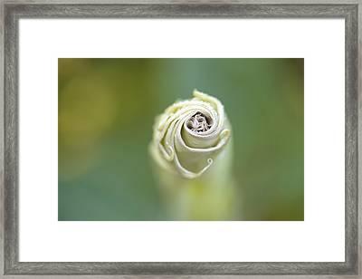 Spiral Framed Print by Nailia Schwarz