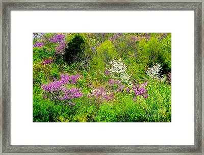 Spring At Devils Den Framed Print by Paul W Faust - Impressions of Light
