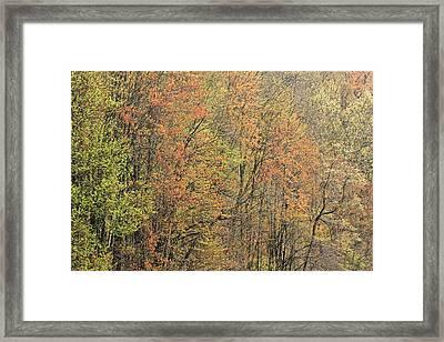 Spring Forest In Bloom Framed Print