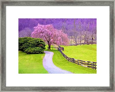 Purple Haze In The Distance Framed Print