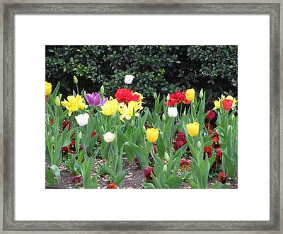 Springtime Glory Framed Print