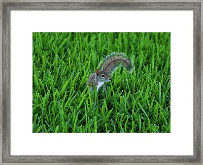 Framed Print featuring the photograph 2- Squirrel by Joseph Keane