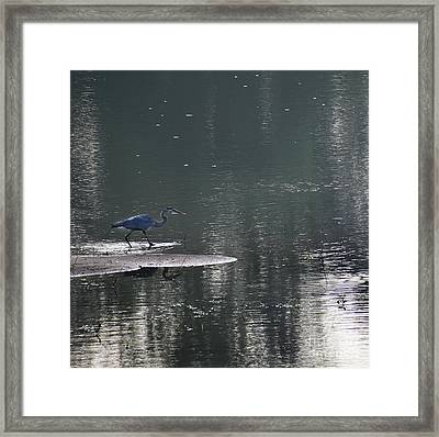 Framed Print featuring the photograph Stalker  by Skip Willits