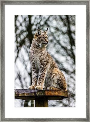 Standing Proud. Framed Print
