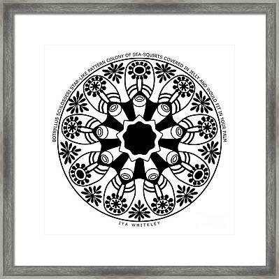 Star-like Colony At The Bottom Of The Sea Framed Print