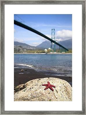 Starfish Stanley Park Vancouver Framed Print