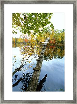 Stepping Tree - Northwoods Wisconsin Framed Print