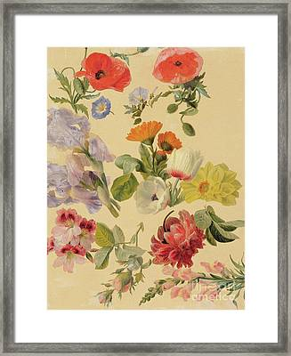 Studies Of Summer Flowers Framed Print by Jacques-Laurent Agasse
