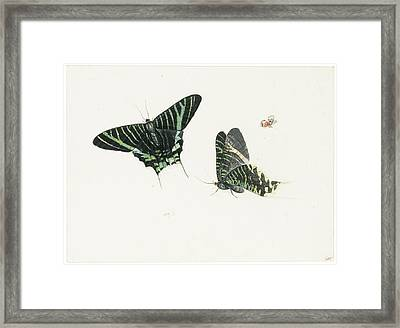 Studies Of Two Butterflies Framed Print by Anton Henstenburgh