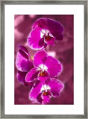 Stunning Orchids Framed Print