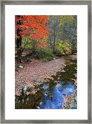 Sugar Maple Birch River Framed Print by Thomas R Fletcher